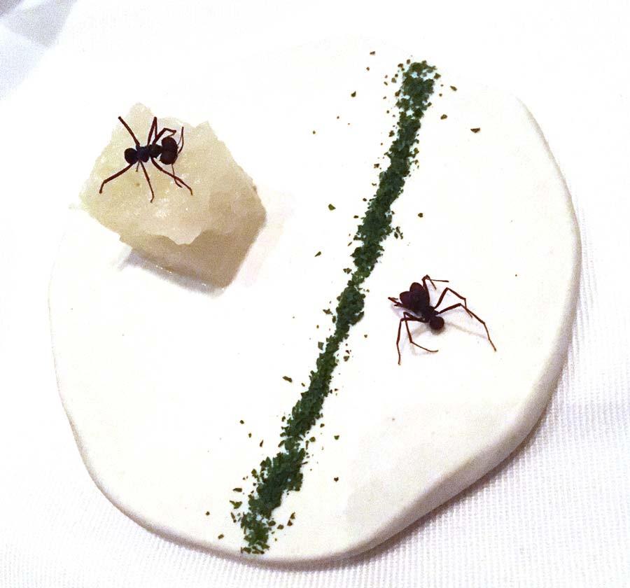 Amazonic ant